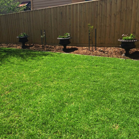 Natural turf with your landscaper Geelong