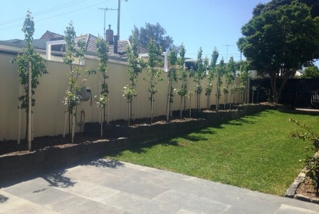 garden design geelong